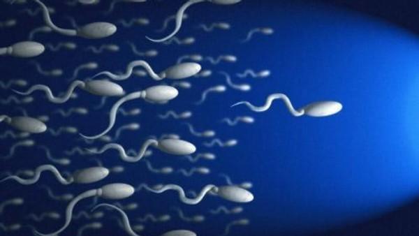 spermatozoidy